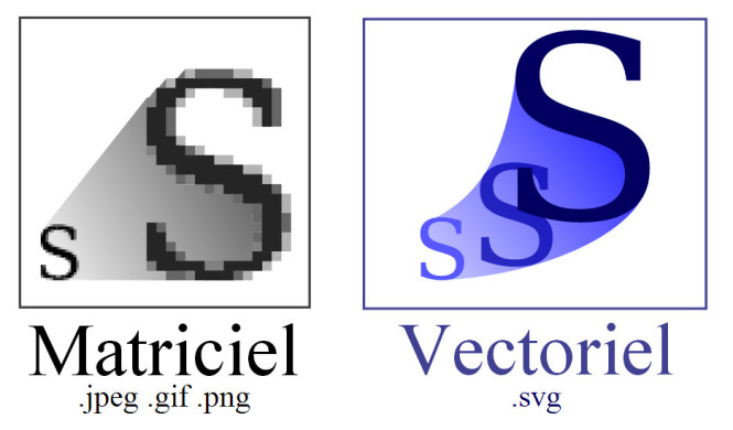 Bitmap image and vector image